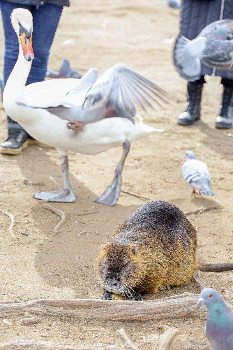 purpurpurpur Prague nutria
